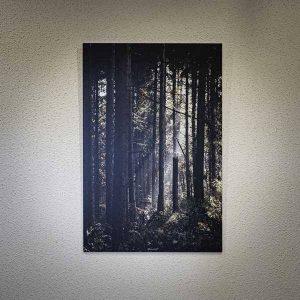 La forêt - Fred Photo