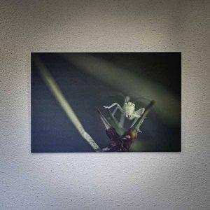 Photo Curiosité - Fred Photo