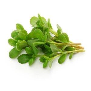 Salade pourpier