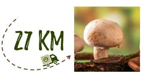 Km + Photo - Ferme Burgaentzlen