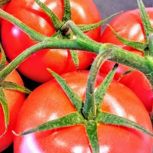 Tomate sieger