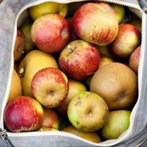 Pommes déclassées ferme Koehl Ruelishein